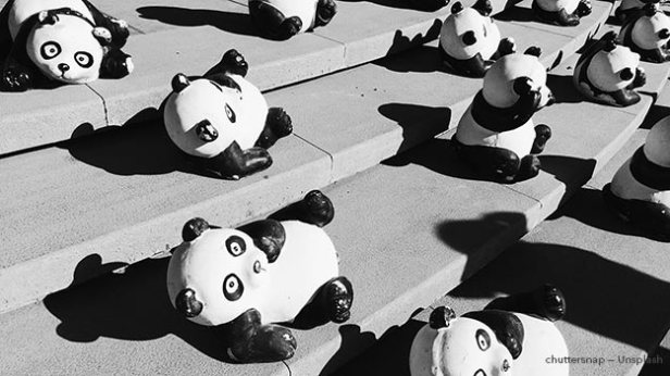 Google Panda Update Image