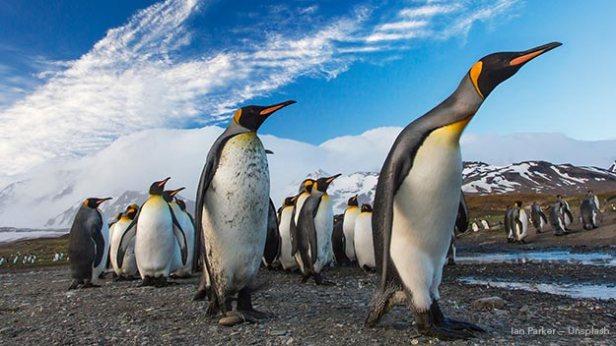 Google Penguin Update Image