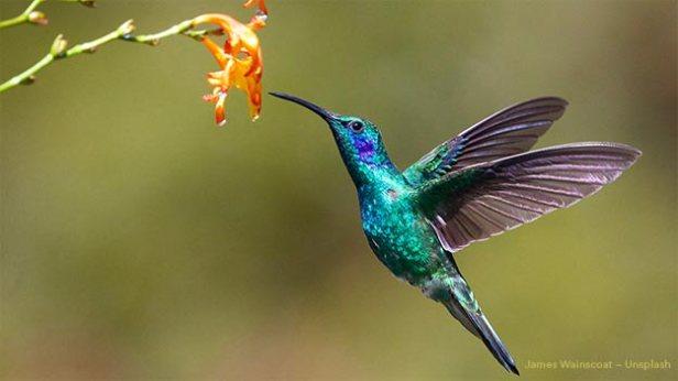 Google Hummingbird Update Image